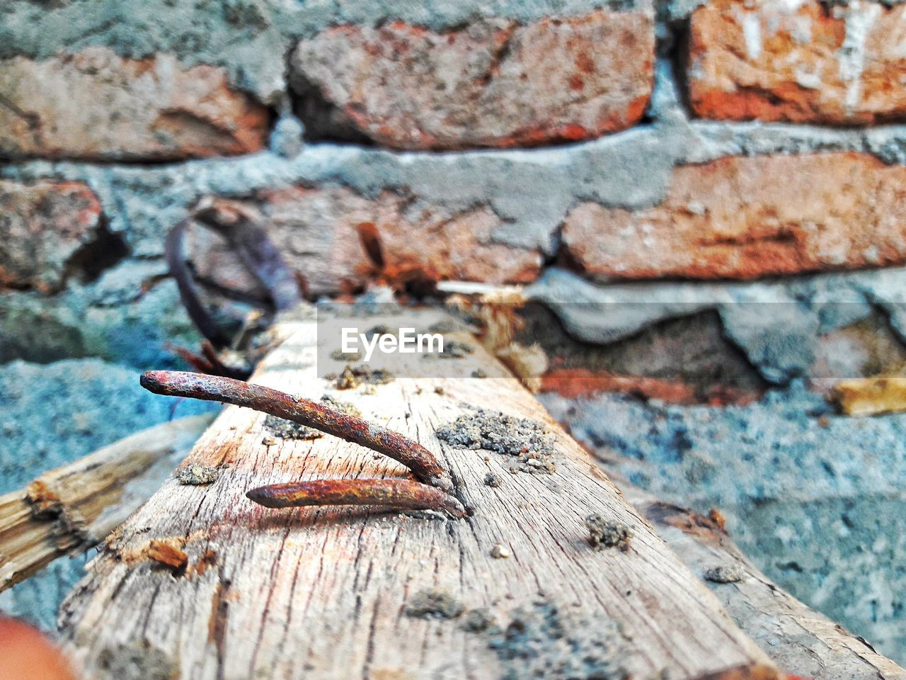wood - material, no people, one animal, outdoors, animal themes, animals in the wild, day, close-up, animal wildlife, reptile, nature