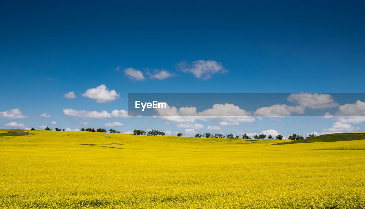 landscape, scenics - nature, beauty in nature, environment, sky, tranquil scene, tranquility, plant, field, yellow, cloud - sky, land, growth, green color, day, no people, nature, idyllic, oilseed rape, grass, outdoors