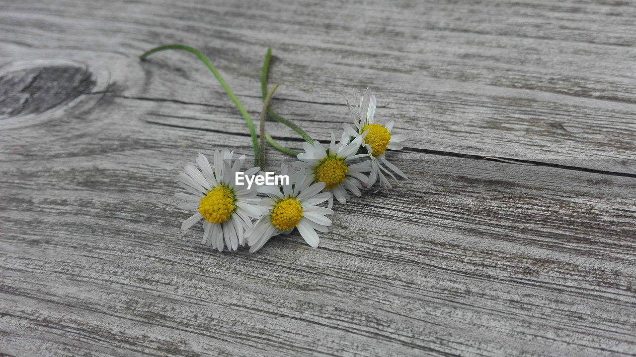 flower, flowering plant, wood - material, plant, fragility, yellow, vulnerability, close-up, table, freshness, inflorescence, petal, plank, nature, flower head, no people, high angle view, beauty in nature, wood, daisy, outdoors, wood grain