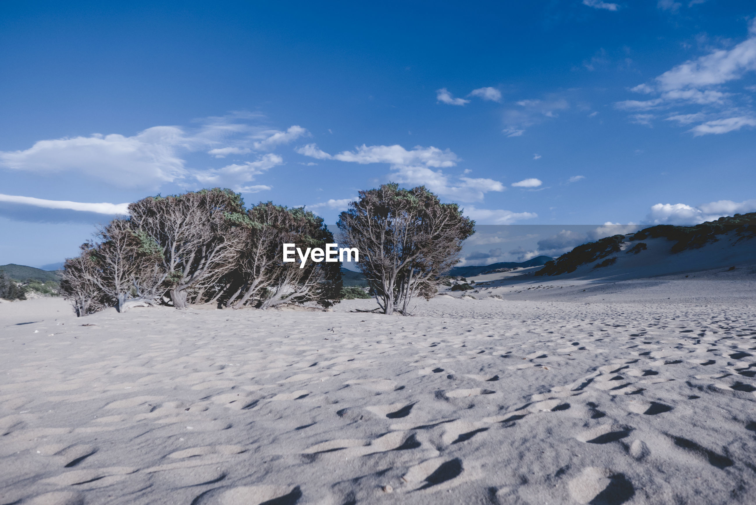 VIEW OF TREES ON SAND AGAINST BLUE SKY