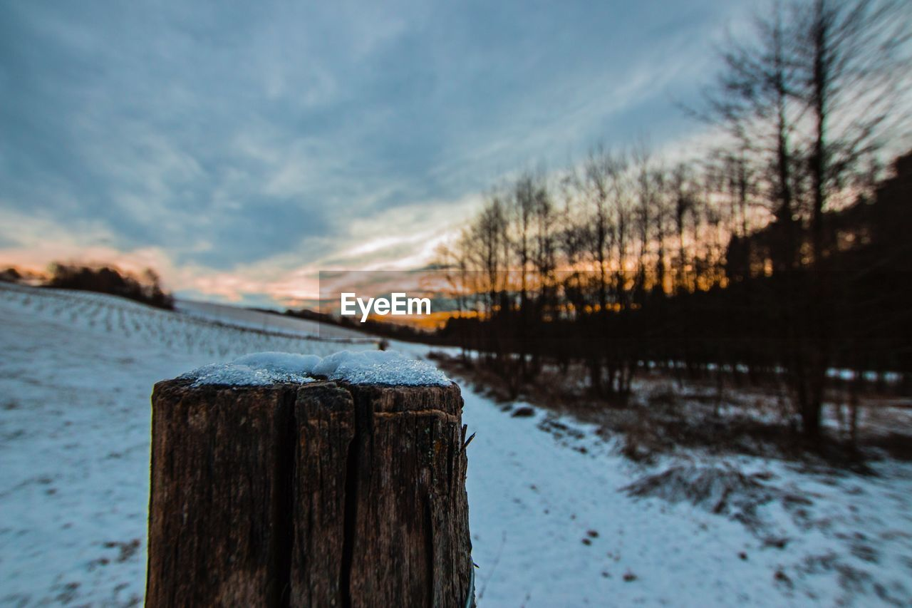 FROZEN WOODEN POSTS IN LAKE DURING WINTER