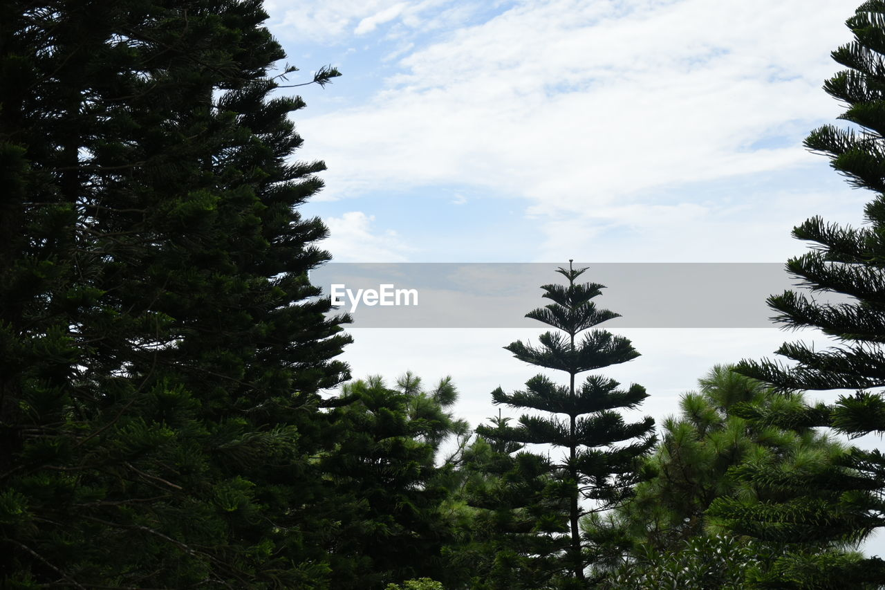 tree, growth, nature, no people, cloud - sky, day, sky, outdoors, beauty in nature, tranquility, low angle view