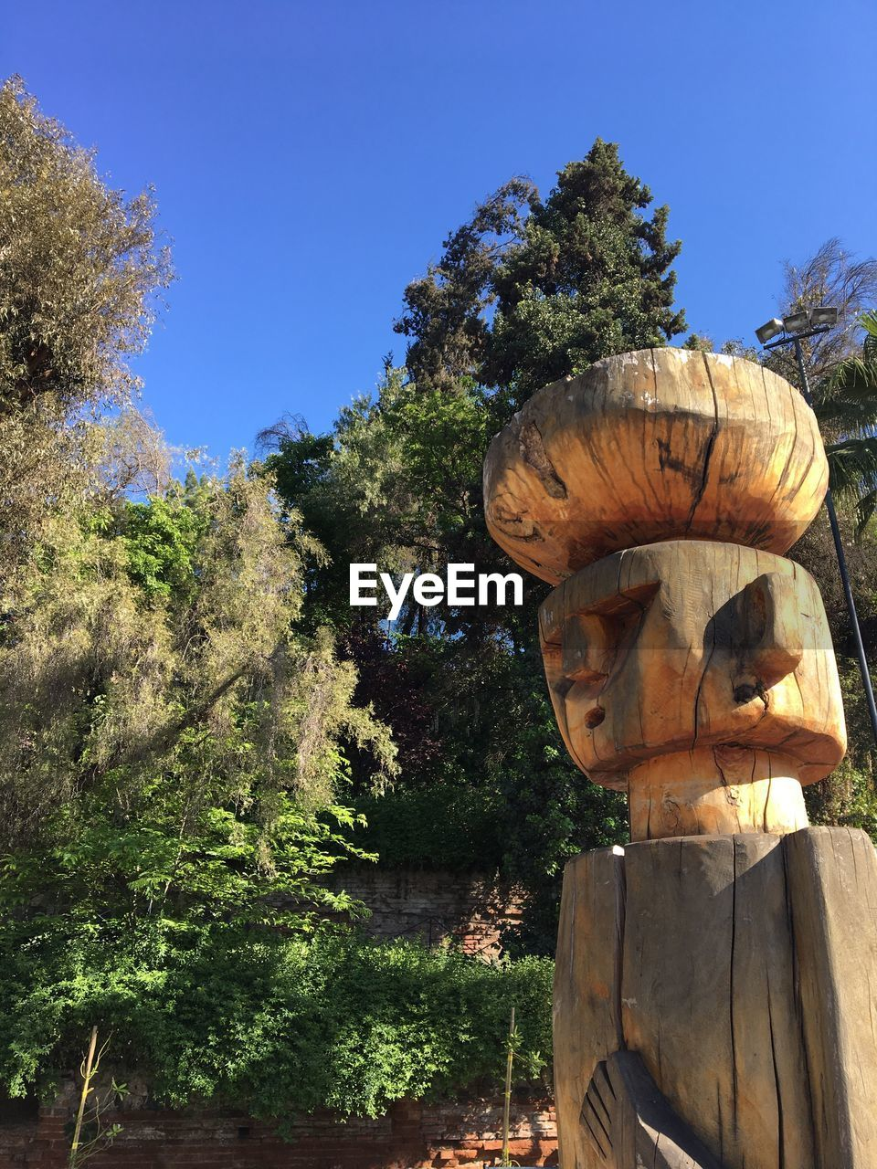 tree, human representation, statue, sculpture, growth, day, nature, no people, outdoors, scarecrow, clear sky, beauty in nature, sky