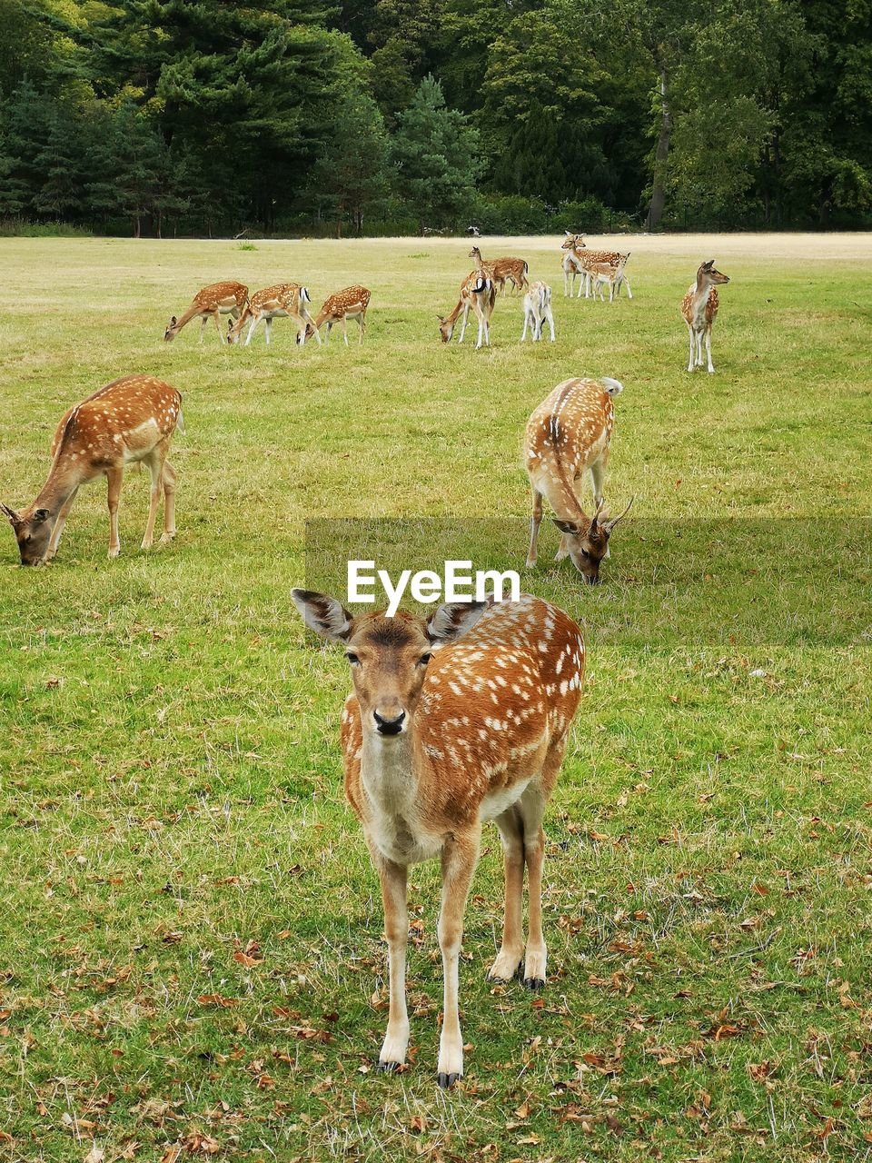 group of animals, animal, animal themes, mammal, plant, grass, field, land, animal wildlife, vertebrate, deer, animals in the wild, domestic animals, day, green color, nature, tree, no people, standing, herbivorous