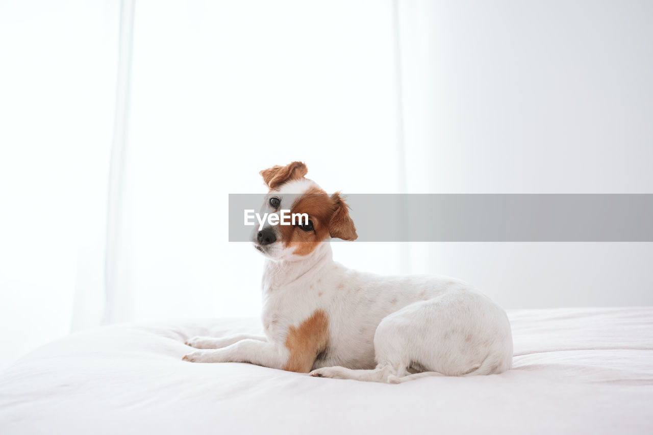 DOG SITTING IN BED