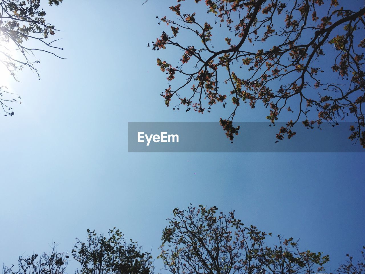 tree, low angle view, branch, nature, beauty in nature, growth, day, no people, clear sky, outdoors, sky, blue, flower, freshness, fragility