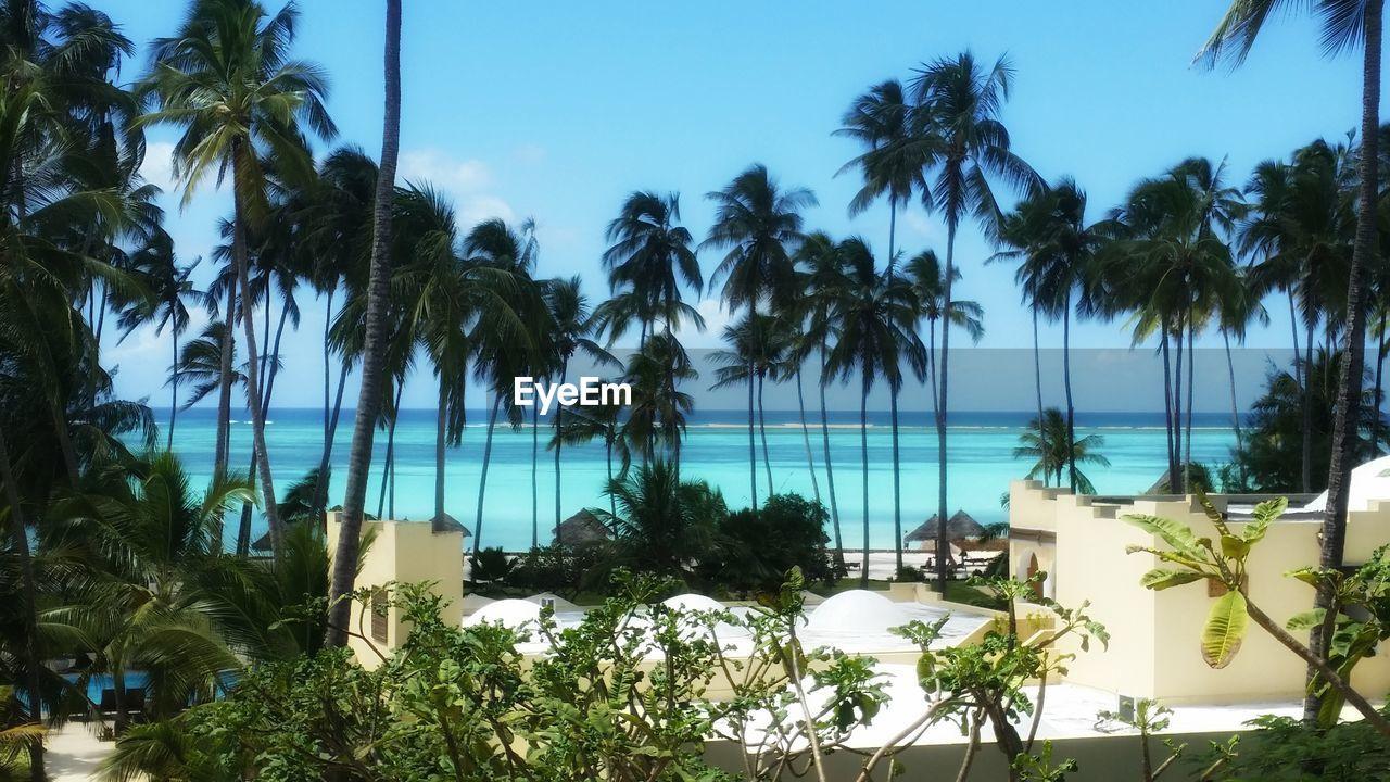 Palm Trees Against Sea