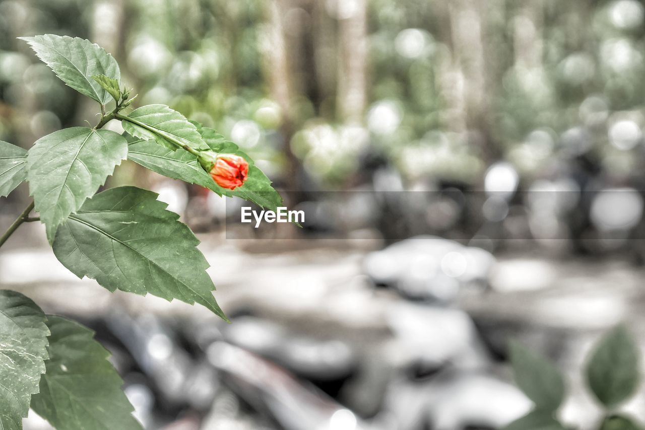 plant part, leaf, plant, growth, beauty in nature, green color, nature, freshness, close-up, day, focus on foreground, no people, flower, vulnerability, red, fragility, flowering plant, outdoors, selective focus, one animal, flower head