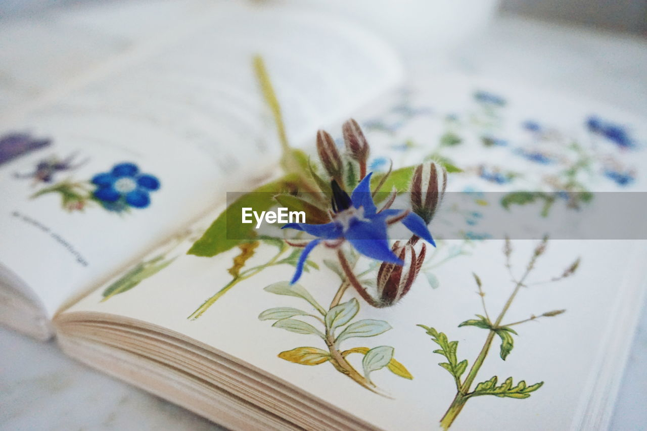Close-up of flower on book