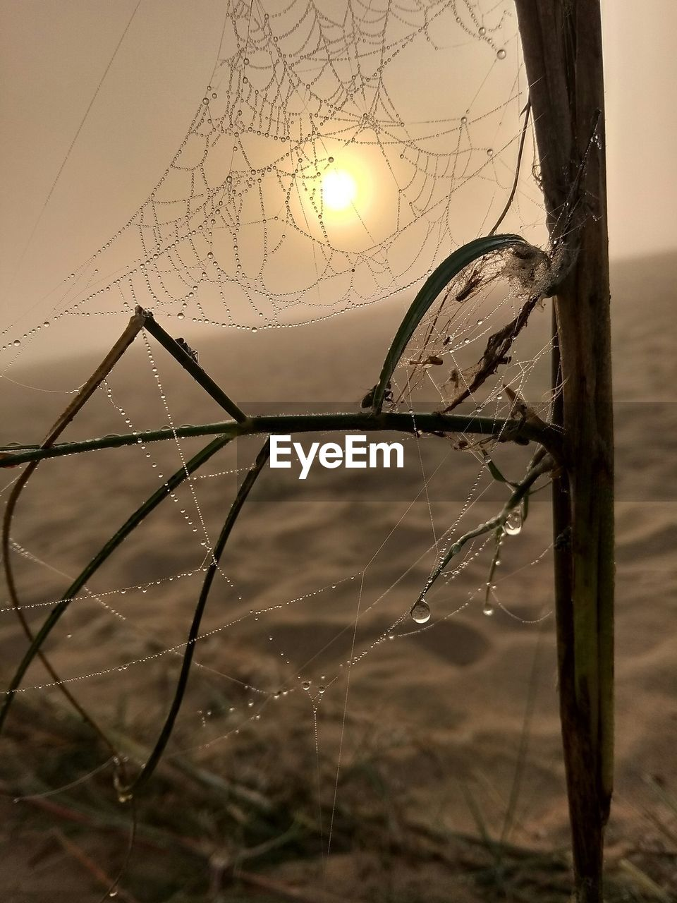 focus on foreground, fragility, no people, sky, plant, vulnerability, spider web, nature, water, sunset, tranquility, close-up, beauty in nature, outdoors, sun, land, sunlight, drop, tree, dead plant