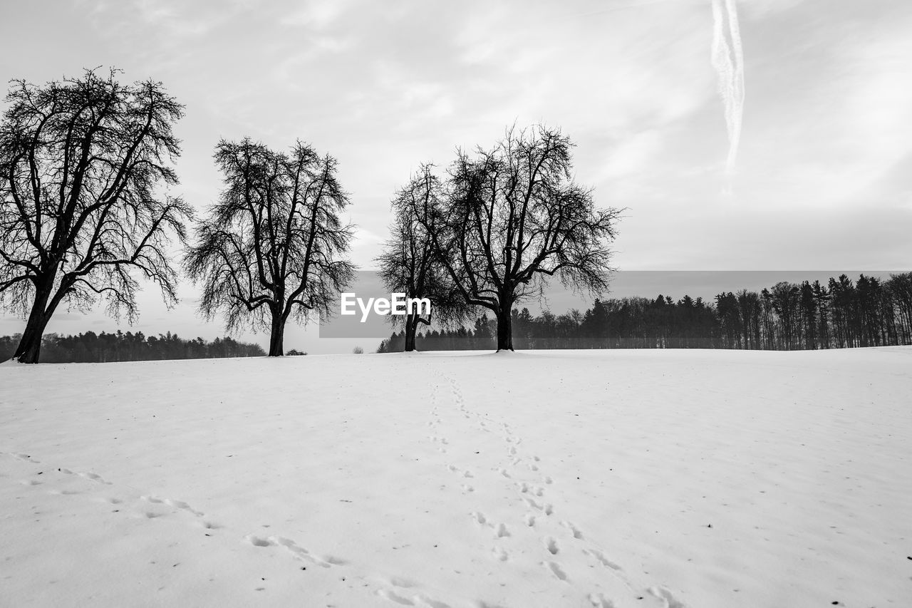 cold temperature, winter, snow, tree, landscape, nature, tranquility, weather, tranquil scene, beauty in nature, sky, cold, bare tree, scenics, outdoors, no people, day, branch