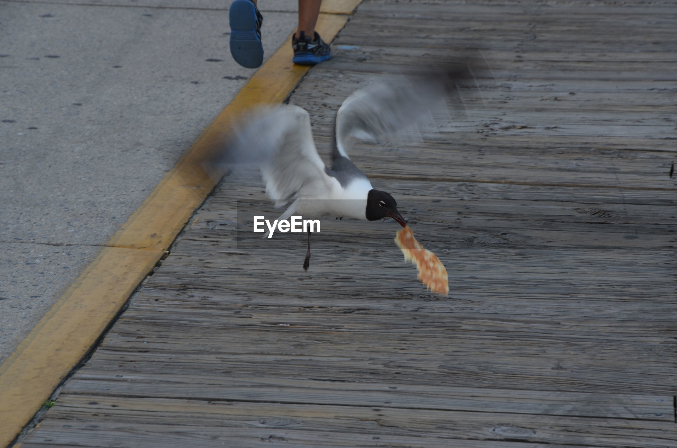 Bird carrying food in beak while flying outdoors