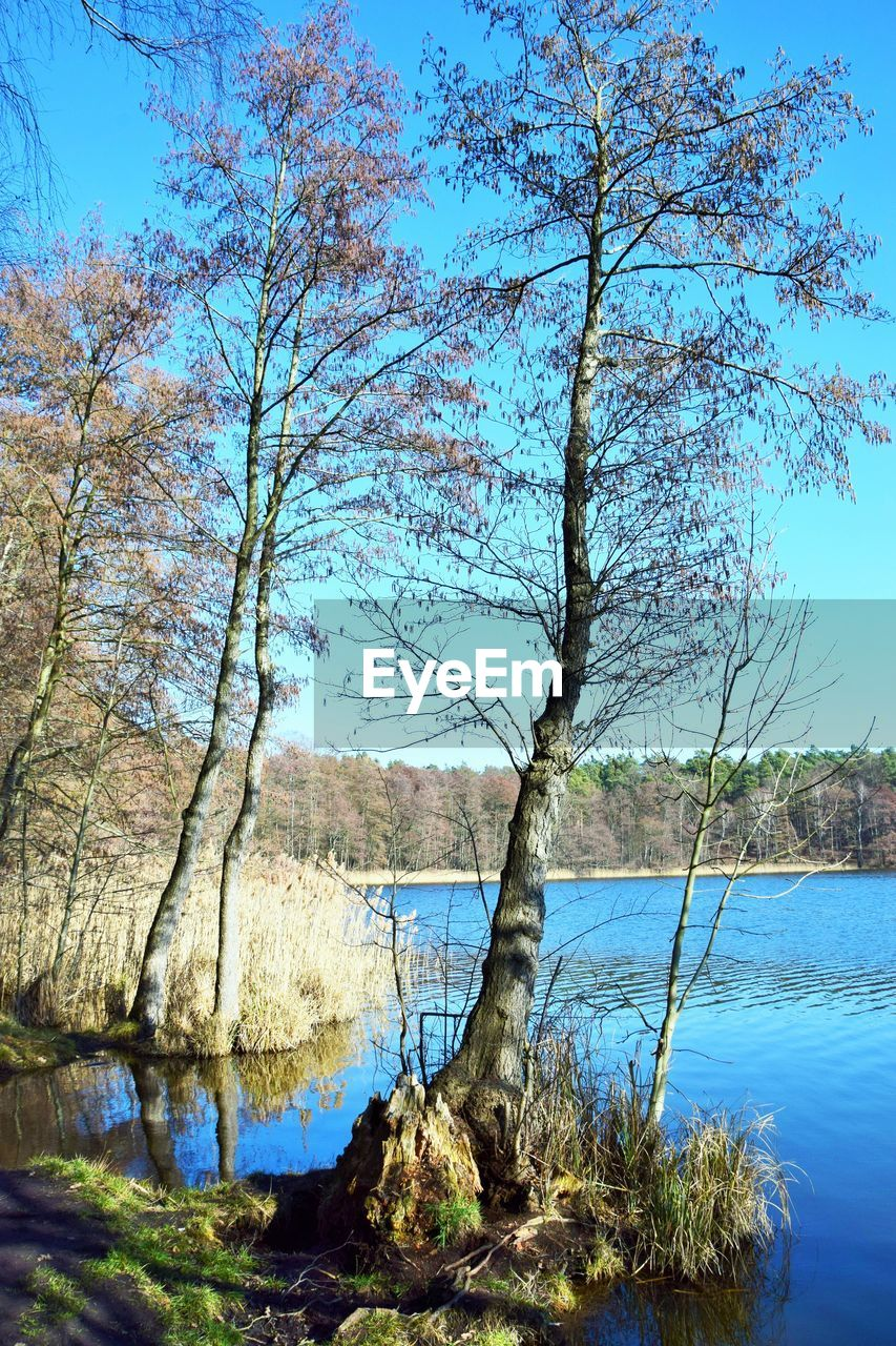 tree, water, plant, tranquility, beauty in nature, tranquil scene, scenics - nature, lake, nature, sky, day, no people, blue, trunk, tree trunk, growth, non-urban scene, branch, outdoors