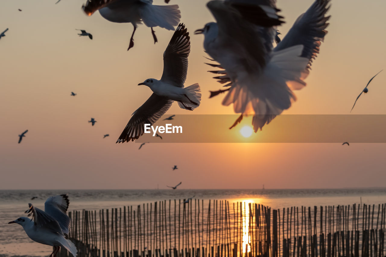 bird, sky, sunset, water, vertebrate, animal themes, animals in the wild, animal, animal wildlife, flying, sea, beauty in nature, group of animals, spread wings, mid-air, orange color, scenics - nature, nature, seagull, no people, horizon over water, outdoors, flock of birds