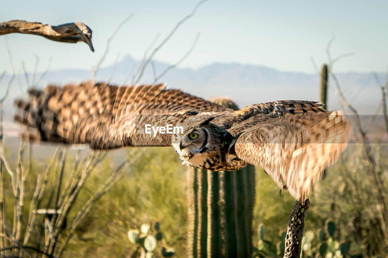 animal, animal themes, animal wildlife, bird, animals in the wild, vertebrate, bird of prey, one animal, focus on foreground, nature, no people, sky, flying, sunlight, plant, day, spread wings, selective focus, outdoors, land, falcon - bird