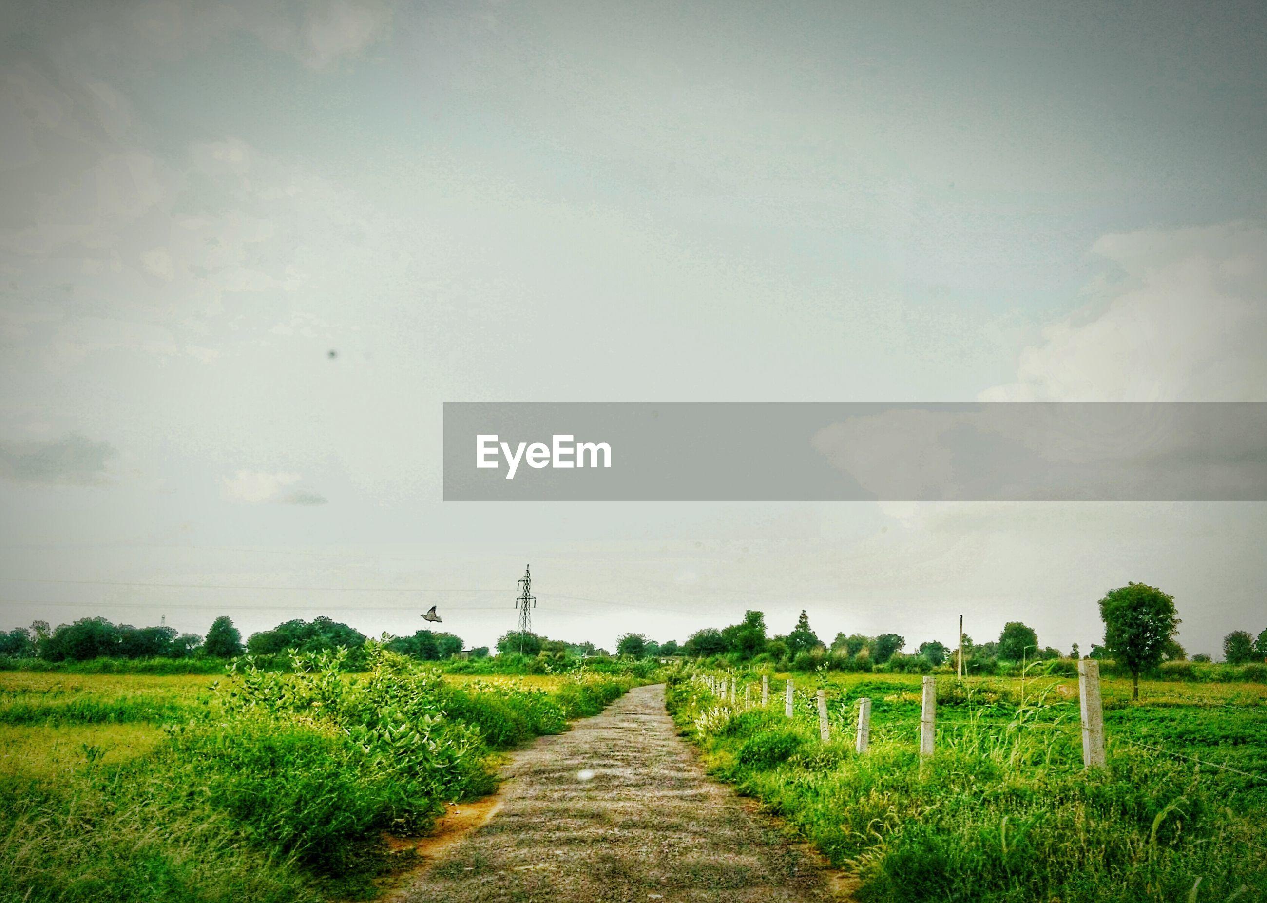 Street amidst field against sky