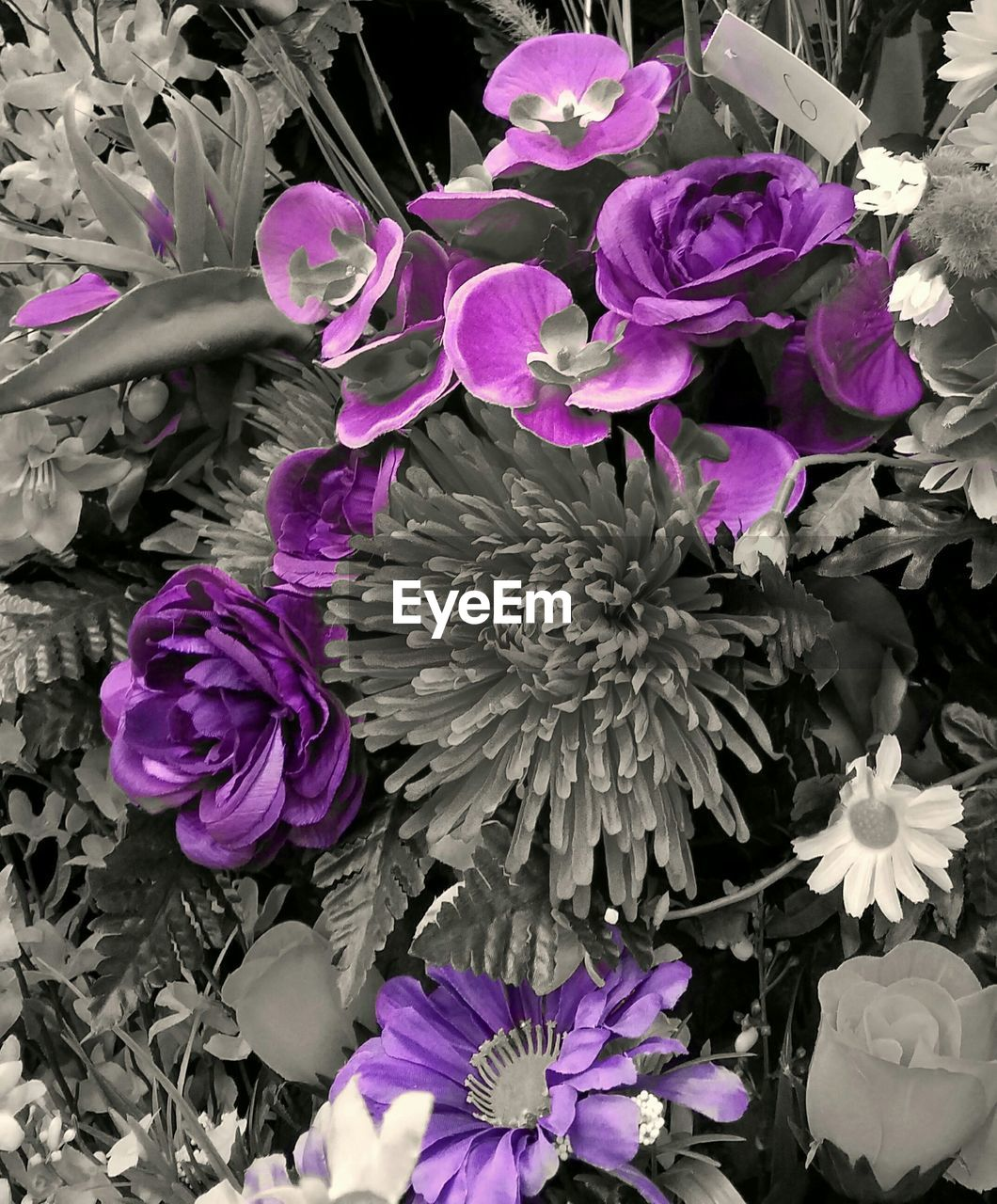 flower, petal, fragility, nature, purple, beauty in nature, growth, flower head, no people, plant, blooming, freshness, outdoors, close-up, day