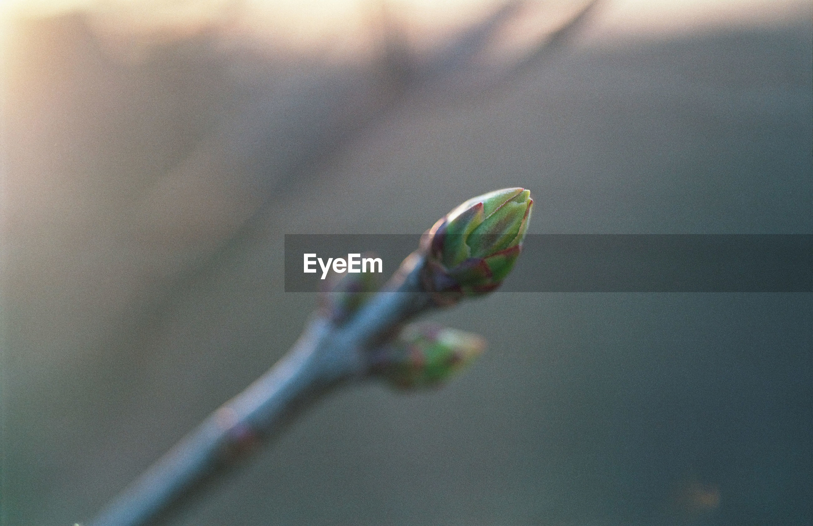 growth, nature, fragility, close-up, no people, plant, beauty in nature, day, outdoors