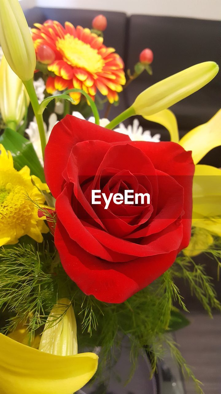 flower, fragility, freshness, petal, flower head, beauty in nature, close-up, nature, rose - flower, no people, plant, bouquet, red, yellow, growth, leaf, indoors, day