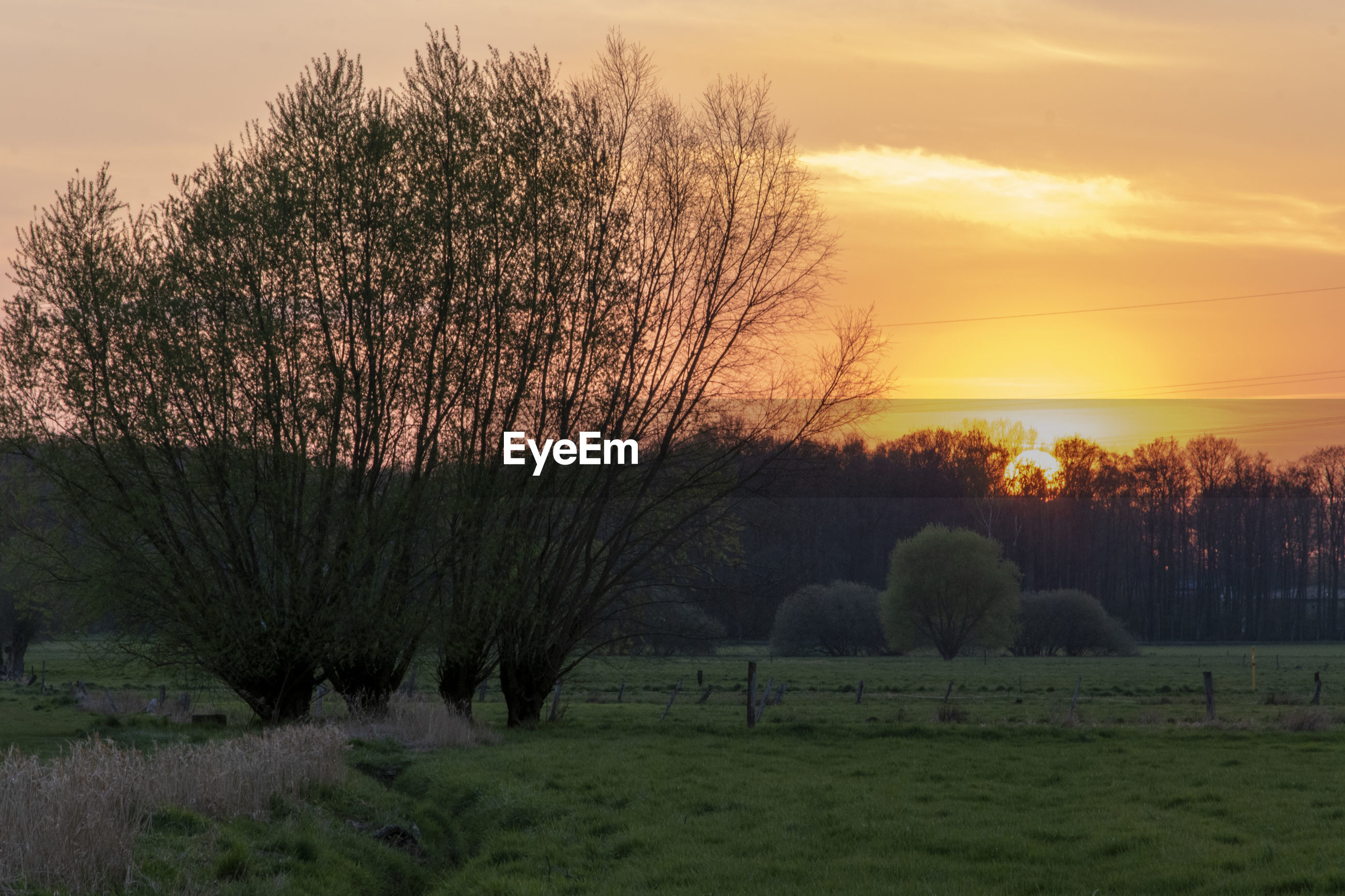TREES ON FIELD DURING SUNSET