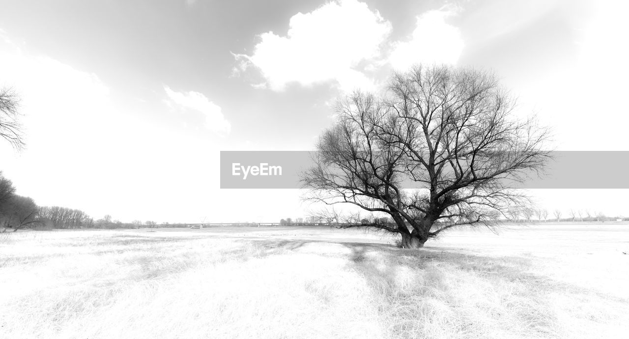 tree, snow, beauty in nature, cold temperature, bare tree, winter, landscape, sky, scenics - nature, tranquility, environment, tranquil scene, cloud - sky, field, land, nature, non-urban scene, plant, day, no people, outdoors, cold, isolated