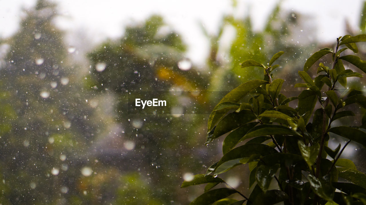 plant, growth, no people, plant part, focus on foreground, nature, leaf, drop, day, green color, water, beauty in nature, close-up, wet, outdoors, selective focus, tree, rain, snowing, raindrop