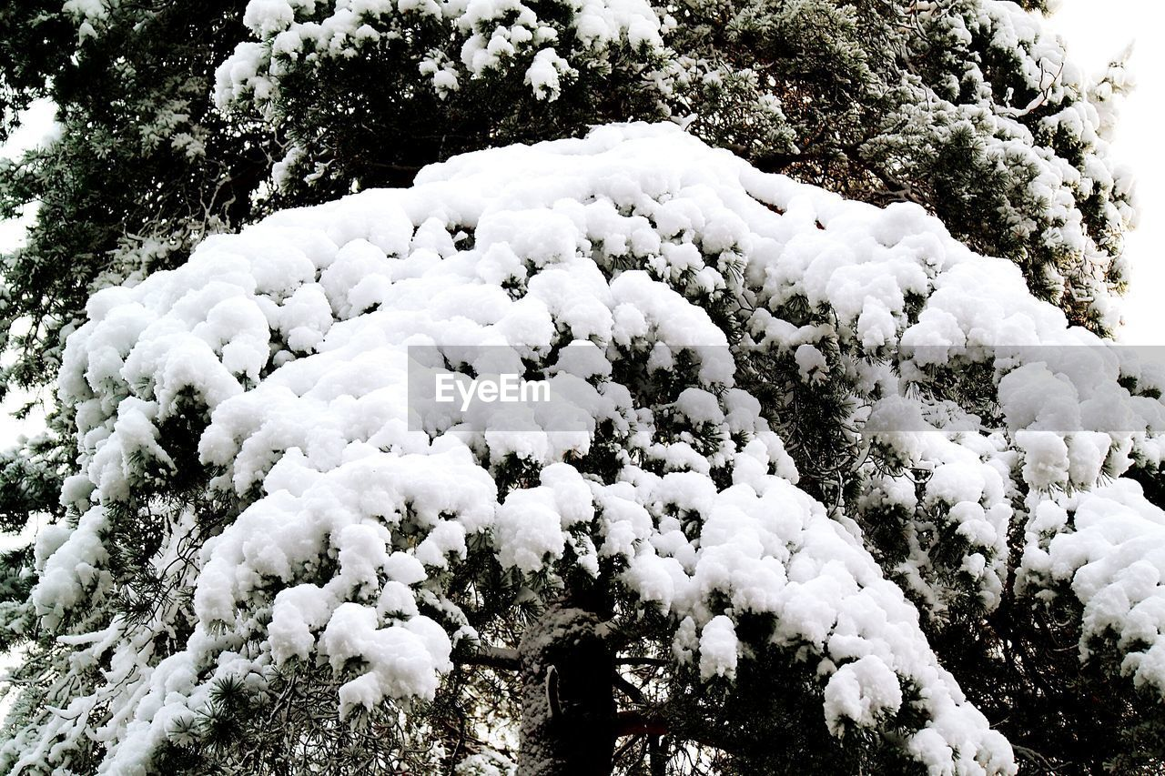 Low angle view of snow-covered trees