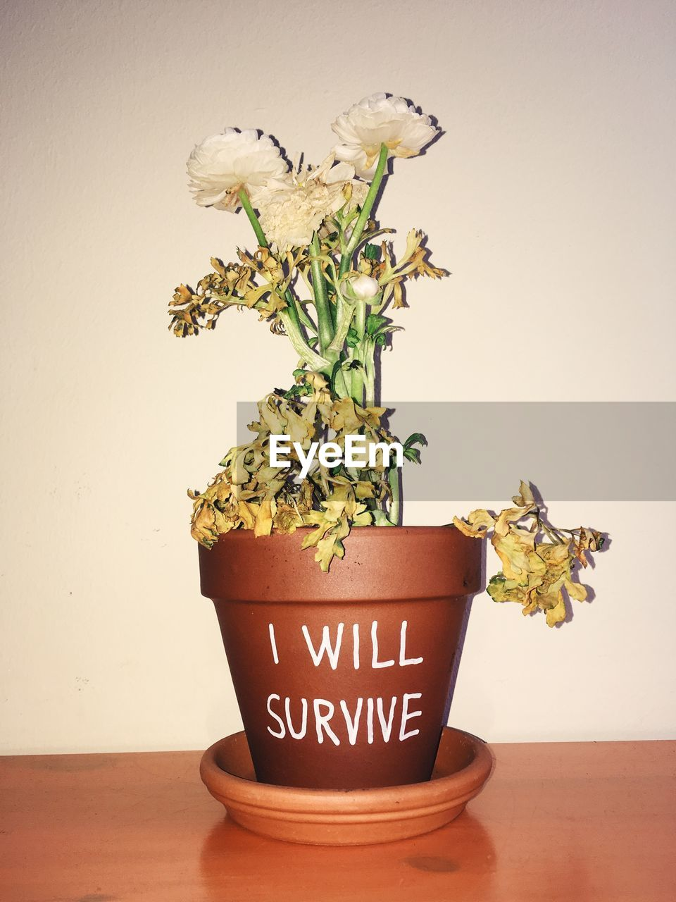 Flower pot with text against wall on table