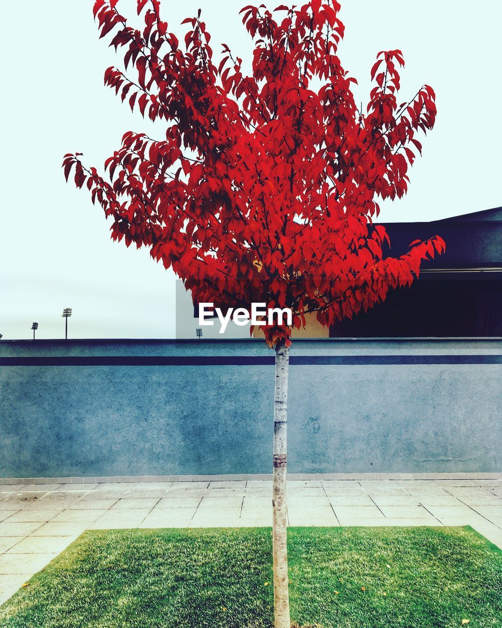 tree, autumn, day, outdoors, no people, nature, change, red, leaf, growth, beauty in nature, architecture, building exterior, built structure, sky, water, clear sky