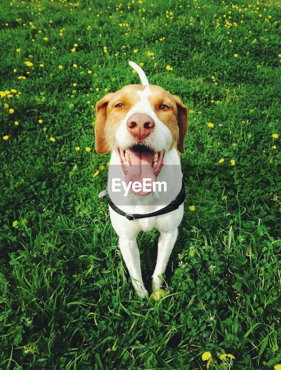 Cute dog on field