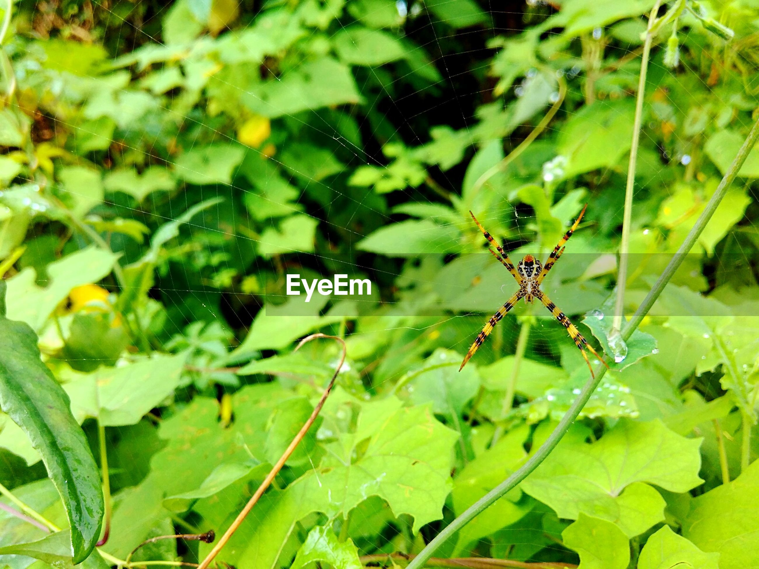 insect, animal themes, animals in the wild, one animal, wildlife, green color, leaf, plant, close-up, growth, nature, focus on foreground, beauty in nature, selective focus, day, outdoors, no people, zoology, two animals, flower