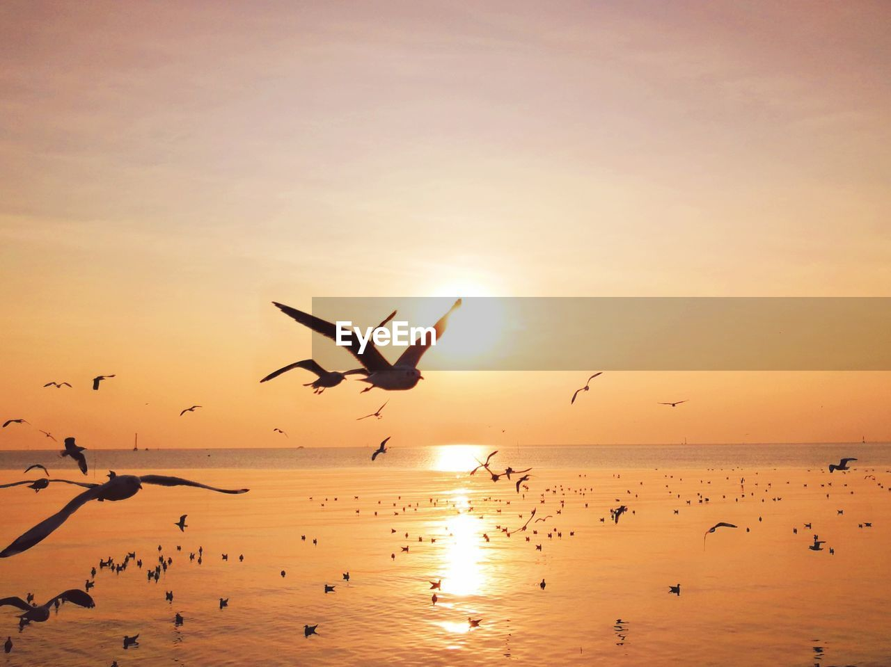 sunset, sky, bird, flying, orange color, water, group of animals, mid-air, silhouette, beauty in nature, animal, sea, animal themes, vertebrate, animals in the wild, scenics - nature, animal wildlife, large group of animals, sun, horizon over water, flock of birds, seagull
