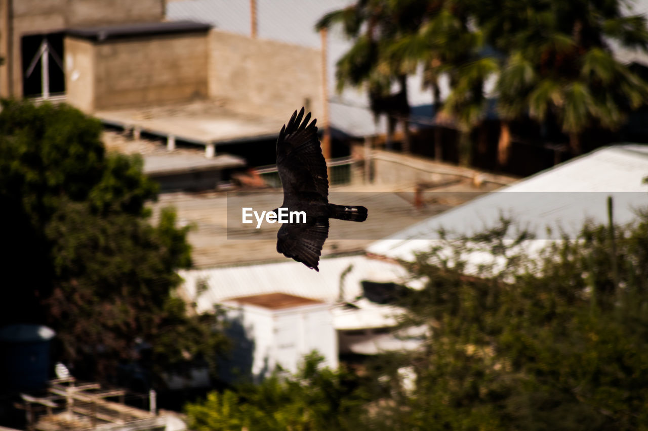 bird, animal themes, animals in the wild, architecture, built structure, building exterior, spread wings, flying, day, one animal, animal wildlife, outdoors, no people, focus on foreground, nature, mid-air, tree, close-up