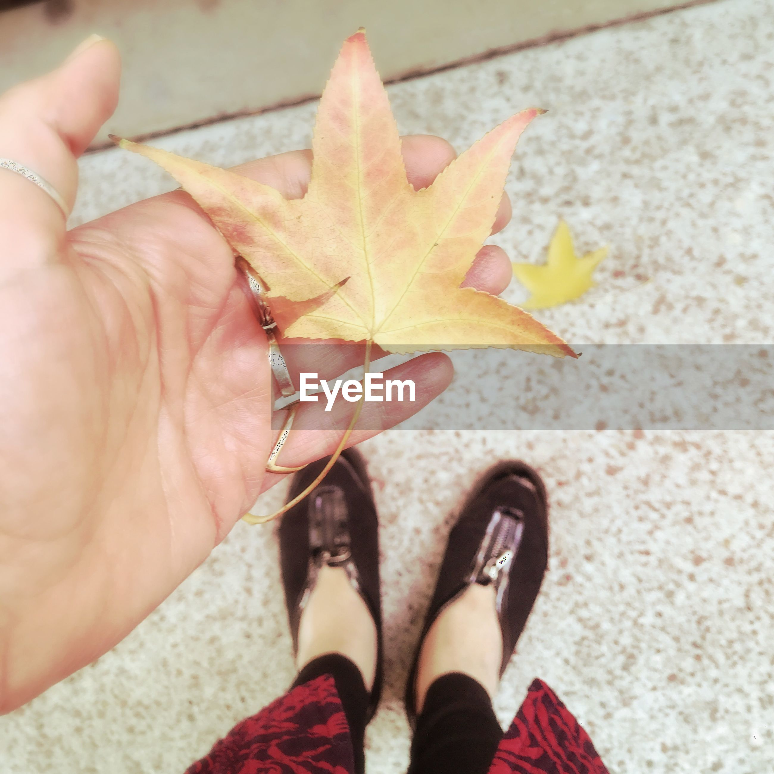 human body part, body part, real people, personal perspective, human hand, low section, one person, hand, human leg, plant part, leaf, day, lifestyles, close-up, autumn, finger, leisure activity, human finger, high angle view, change, outdoors, maple leaf, human foot, starfish, human limb