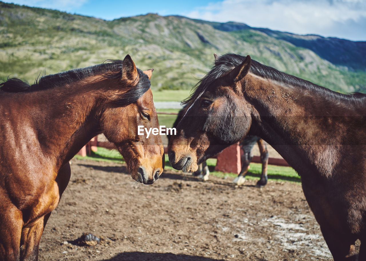 domestic animals, mammal, animal, domestic, group of animals, animal themes, pets, livestock, vertebrate, two animals, land, field, horse, nature, animal wildlife, landscape, day, mountain, environment, standing, no people, herbivorous, outdoors, ranch, animal head, animal family