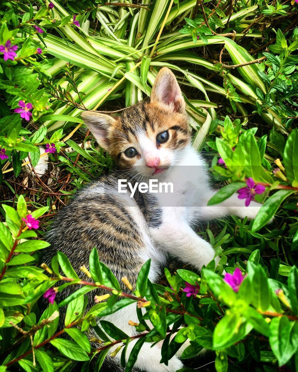 mammal, domestic, animal themes, animal, domestic cat, cat, pets, feline, domestic animals, plant, vertebrate, one animal, portrait, green color, no people, looking at camera, nature, flowering plant, flower, plant part, kitten, whisker