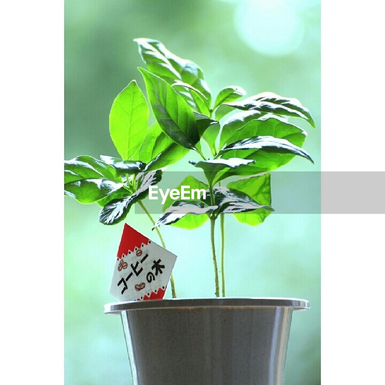 potted plant, leaf, growth, plant, no people, green color, indoors, day, close-up, freshness