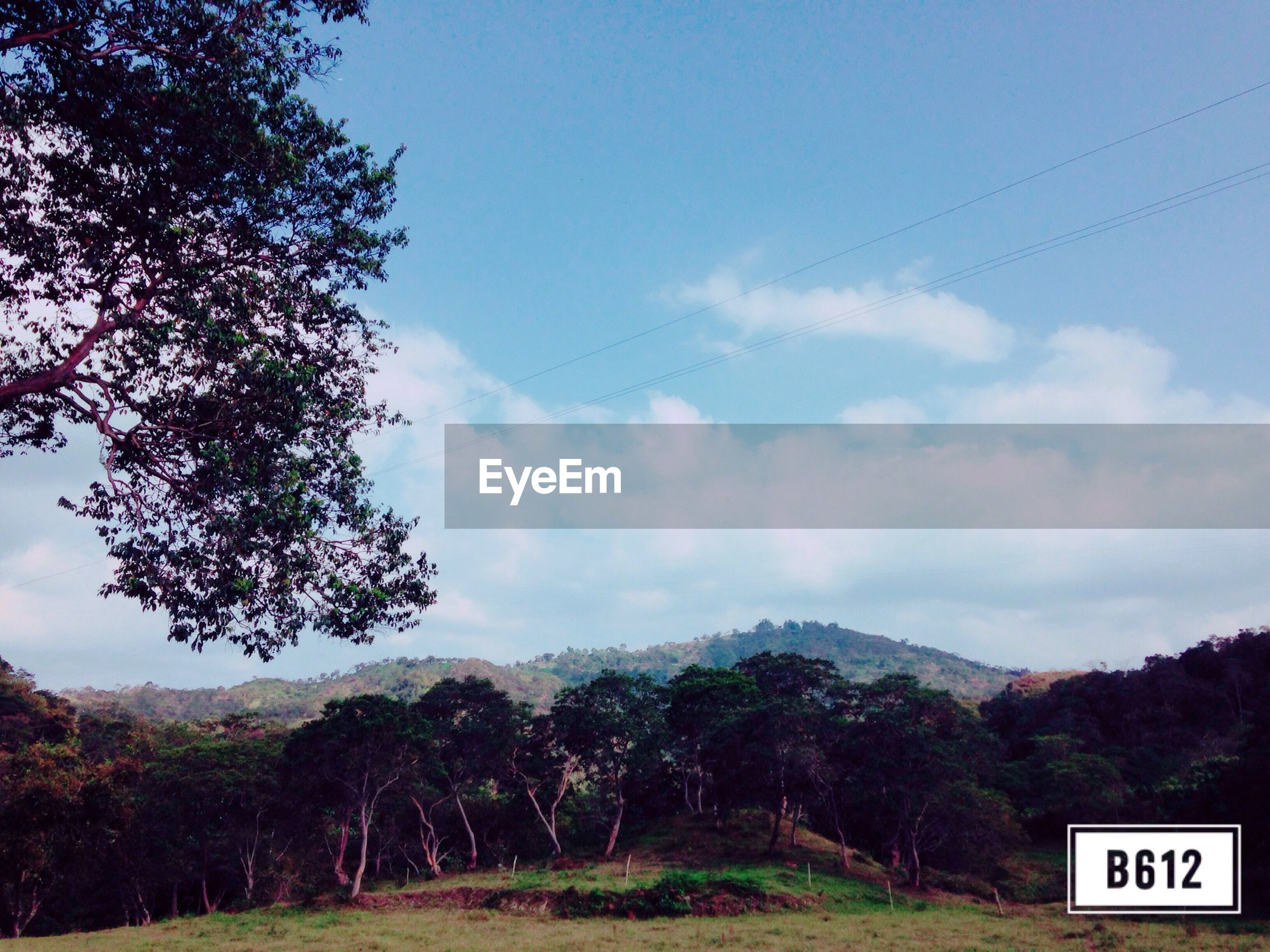 tree, mountain, landscape, tranquil scene, sky, tranquility, scenics, beauty in nature, nature, road, mountain range, non-urban scene, communication, text, road sign, country road, western script, countryside, remote, transportation