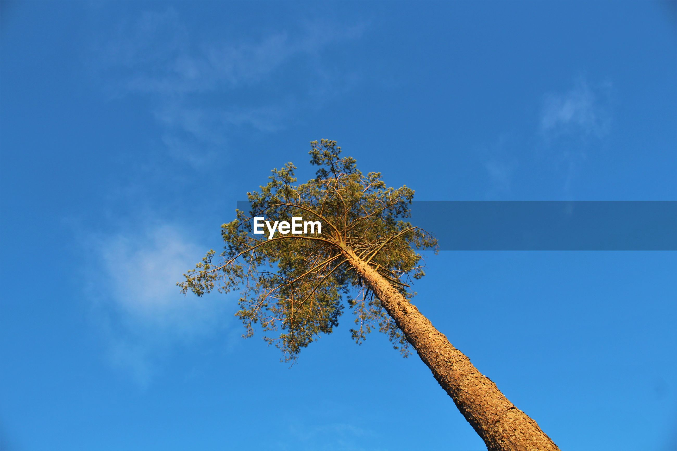 LOW ANGLE VIEW OF TREE AGAINST BLUE SKY AND CLOUDS