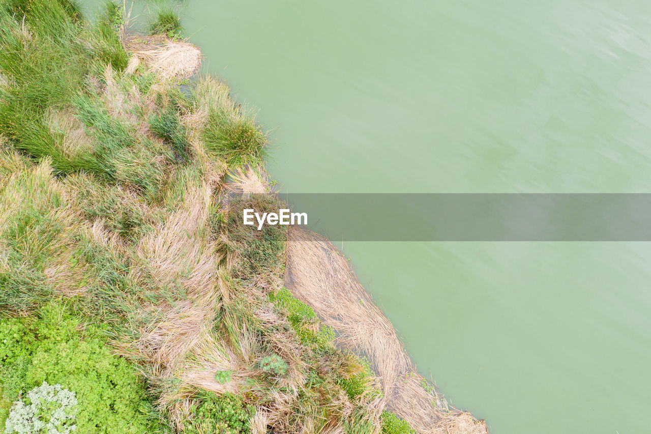 water, plant, nature, beauty in nature, day, high angle view, no people, green color, tranquility, scenics - nature, outdoors, growth, lake, tranquil scene, non-urban scene, grass, tree, rock, land