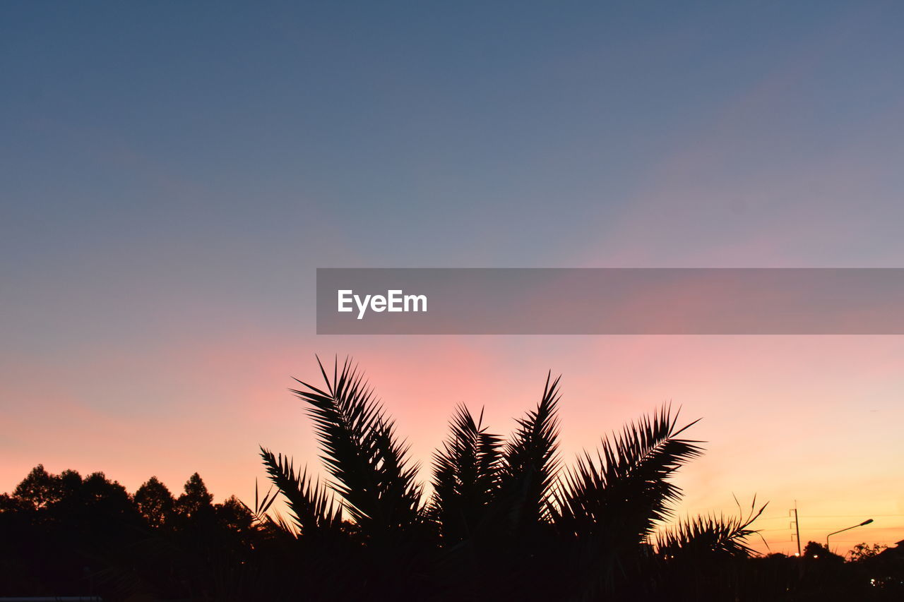 sunset, sky, plant, beauty in nature, scenics - nature, orange color, silhouette, tranquility, tree, tranquil scene, growth, nature, copy space, no people, non-urban scene, cloud - sky, idyllic, outdoors, low angle view, palm tree, romantic sky
