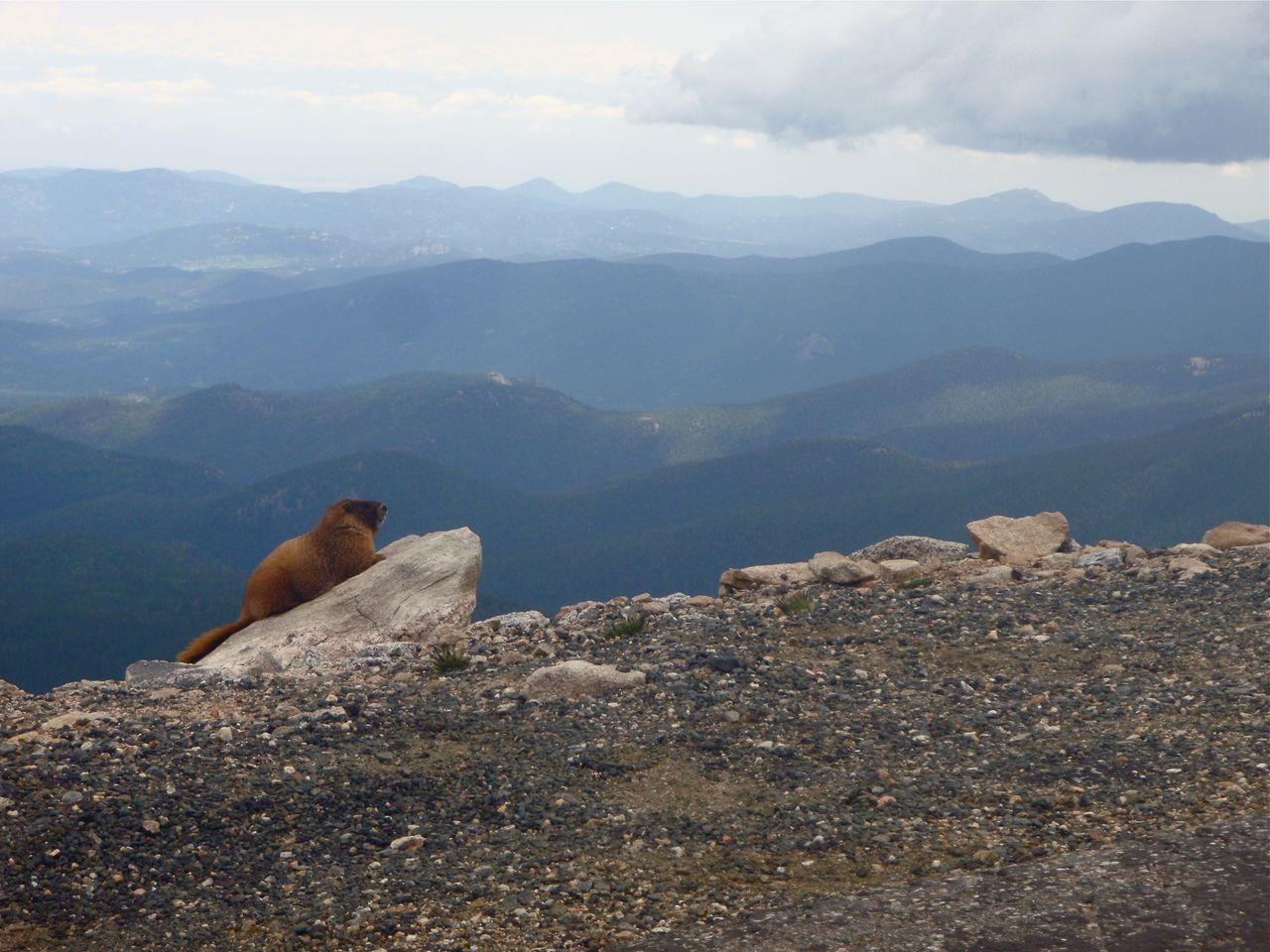 Marmot On Rock Over Mountain Against Sky