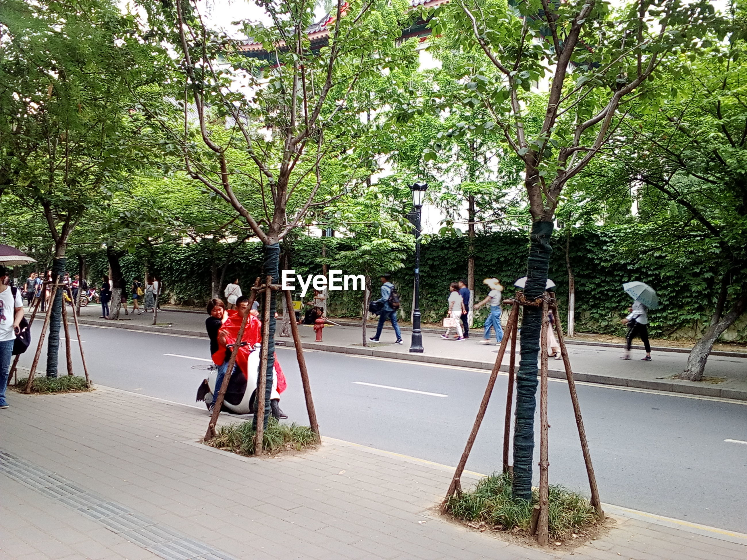People on road against trees in city
