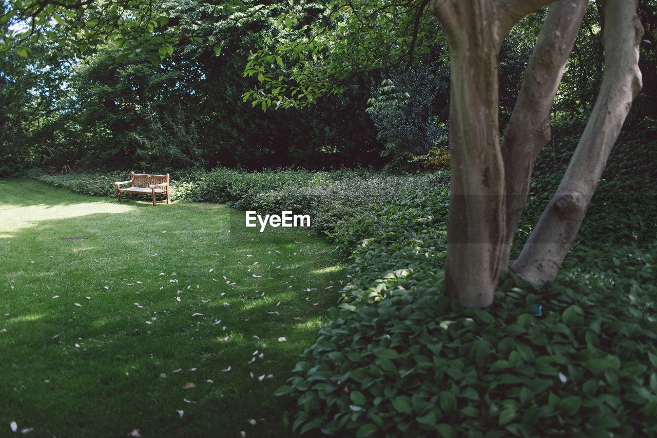 Trees in garden