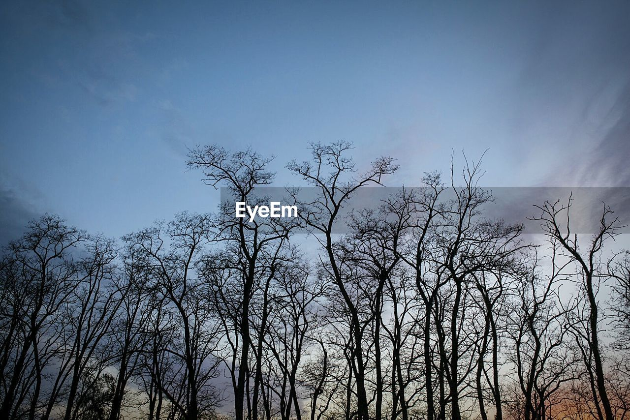 tree, low angle view, bare tree, nature, beauty in nature, outdoors, sky, no people, day, branch, tranquility, forest, clear sky, scenics