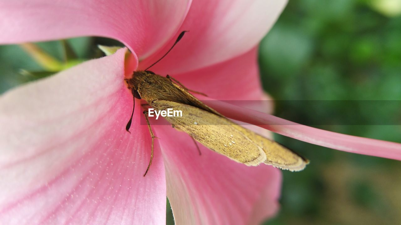 INSECT ON PINK FLOWER