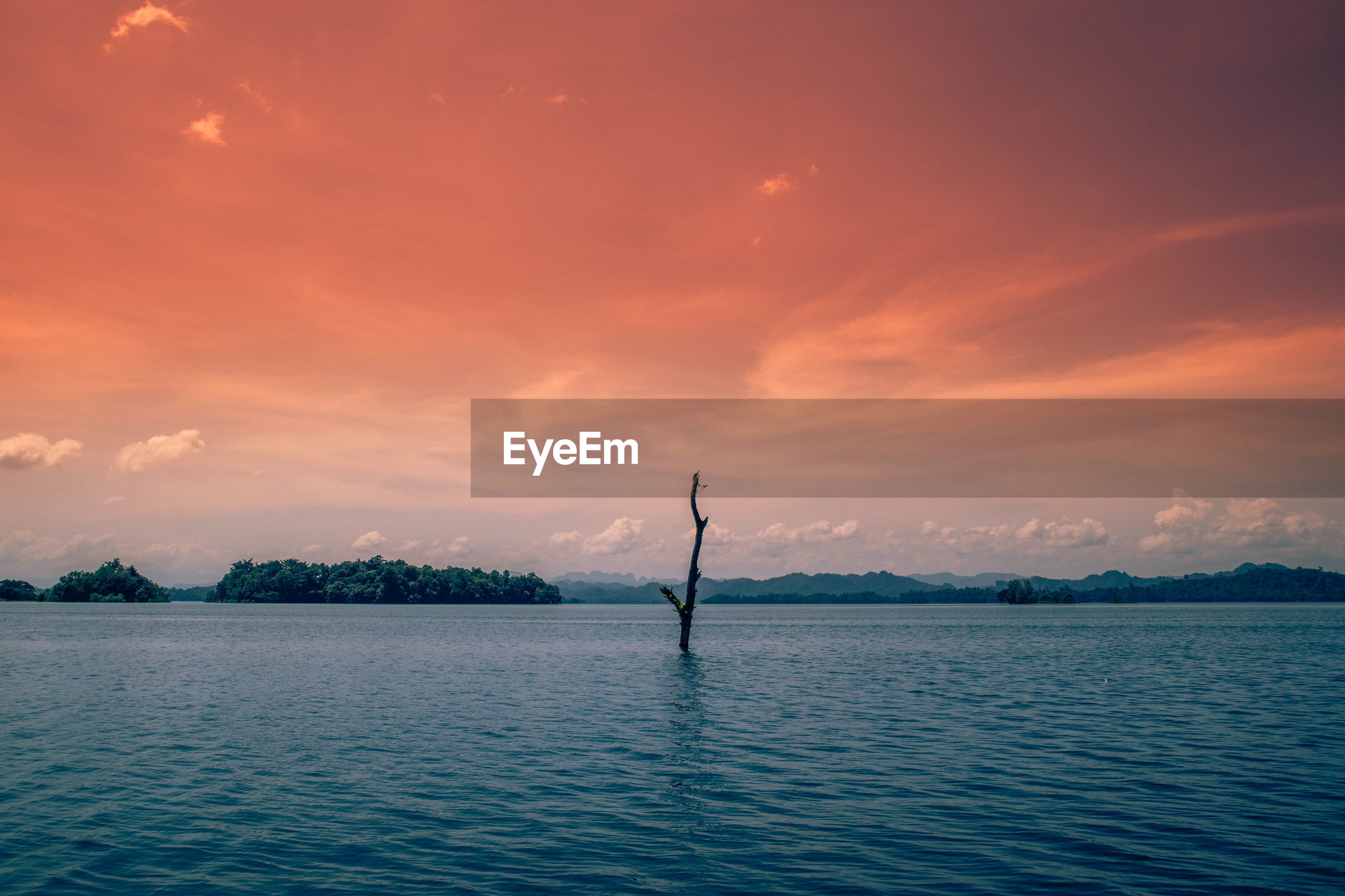 Bare tree in lake against dramatic sky