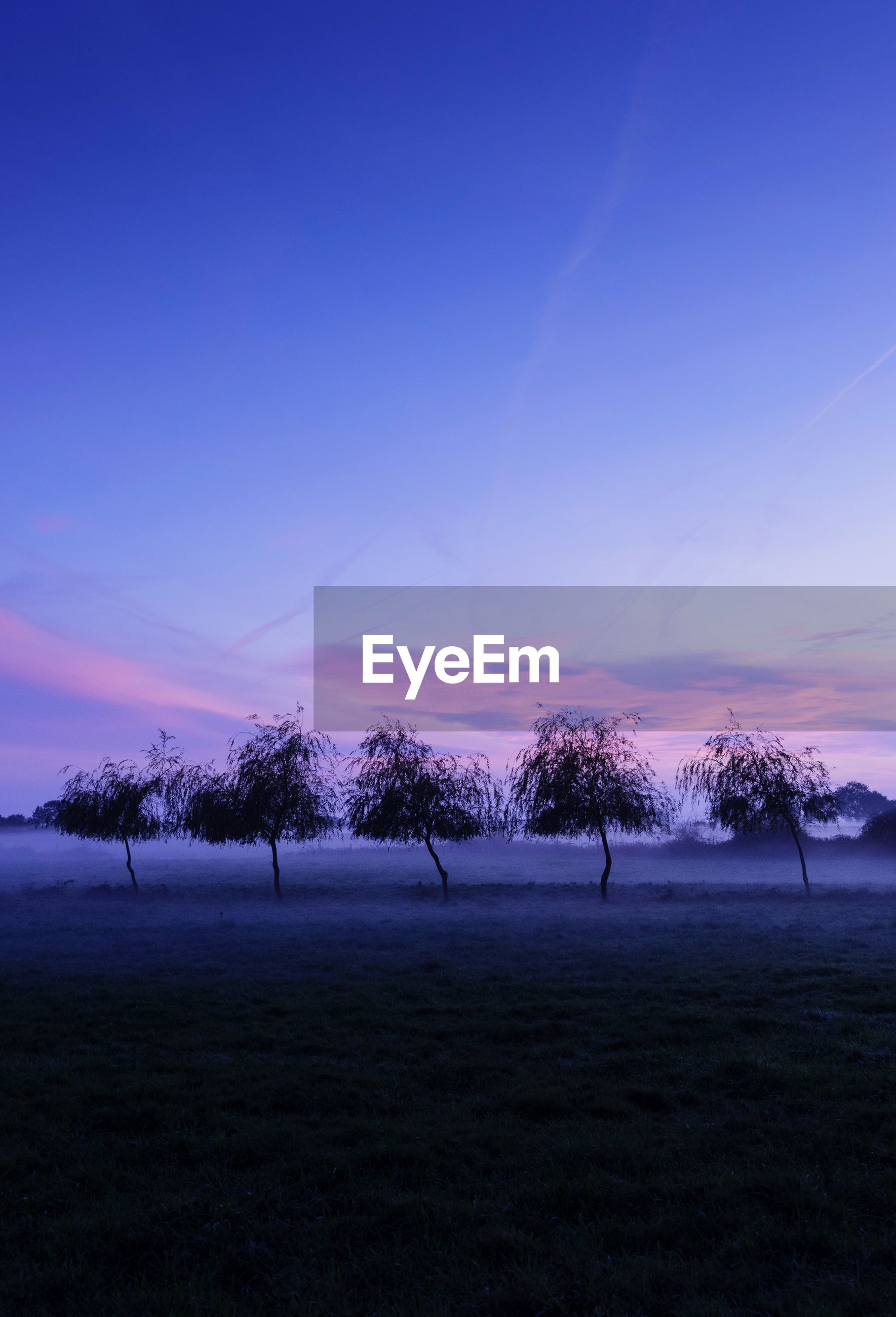 sky, beauty in nature, tree, environment, scenics - nature, plant, tranquil scene, land, field, landscape, nature, tranquility, non-urban scene, sunset, cloud - sky, no people, idyllic, copy space, winter, outdoors, purple