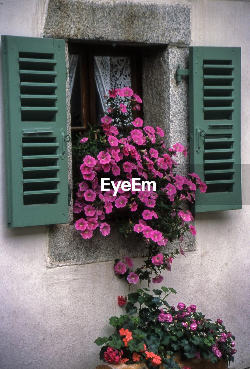 Purple flowering plants blooming on window box