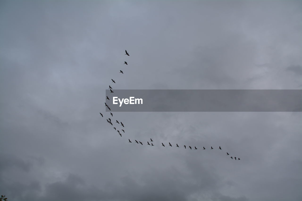 Low Angle View Of Silhouette Birds Flying In Cloudy Sky